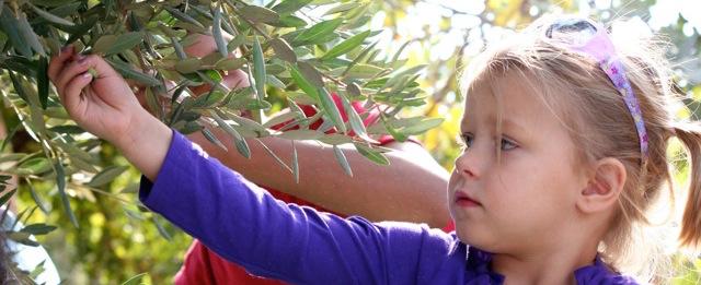 foreign girl - Ajloun Jordan Olive Harvest