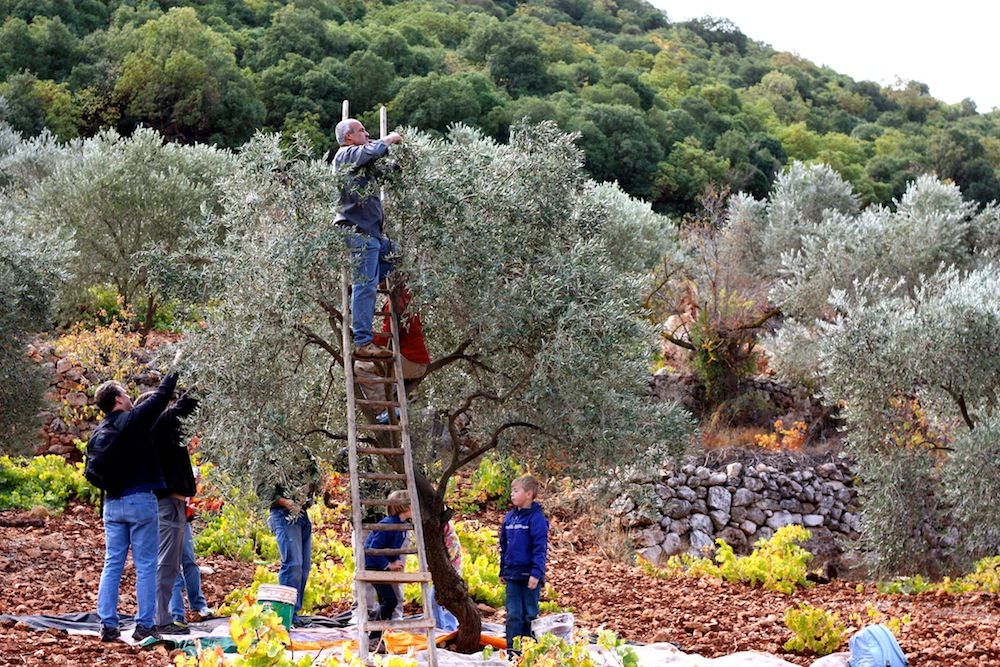 Jordan Olive Harvest Tour – Engaging Cultures Travel